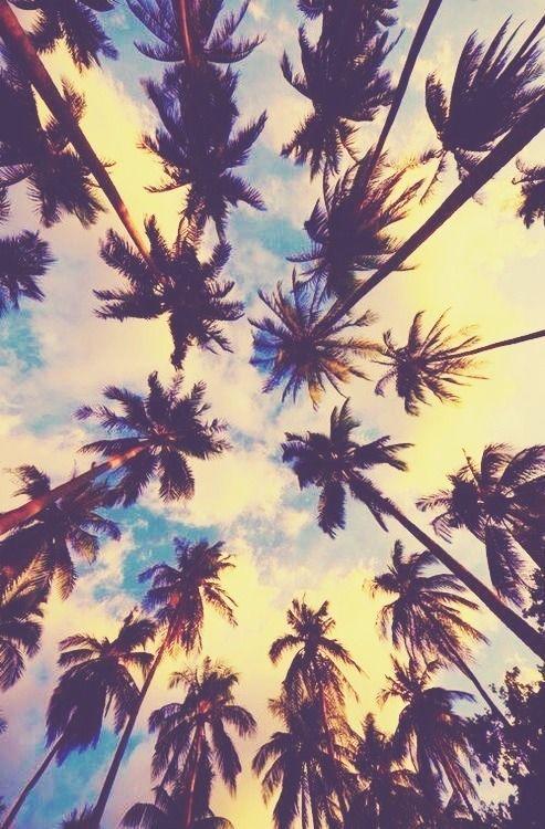 palmeras-daily-mail